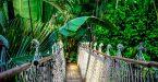 הטבע באיי סיישל - גשר חבלים