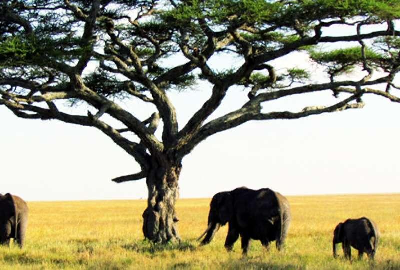ספארי 8 ימים טנזניה