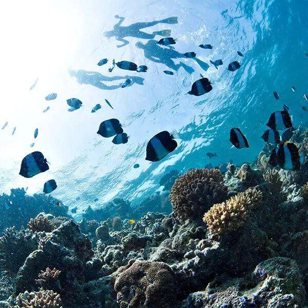 צלילות באוקיינוס ההודי