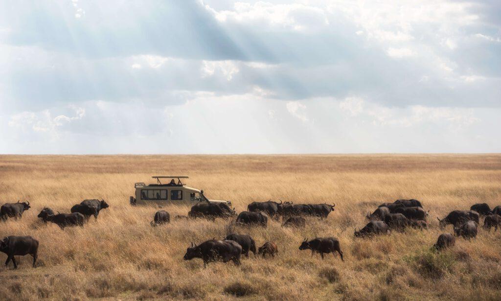 שמורת הסרנגטי בטנזניה